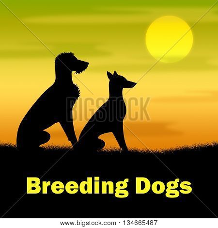 Breeding Dogs Shows Reproducing Doggy And Canines