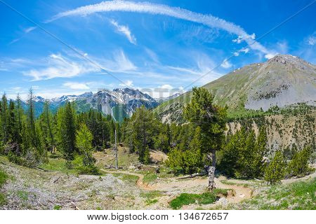 Hiking Trail Crossing High Altitude Conifer Woodland With Snowcapped Mountain Range In Background An
