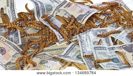 Big ugly worms crawling over dollars banknotes background, economic decay concept