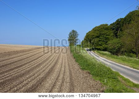 A country road in summer beside a potato field in the Yorkshire wolds, England under a blue sky.
