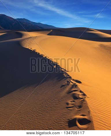 Along the edge of the sand dunes is a chain of deep tracks. Sandy Desert in Mesquite Flat, Death Valley, USA