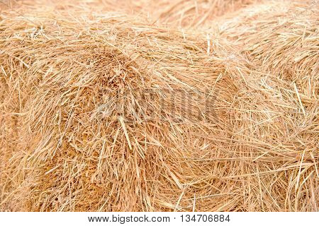 Details of hay straw on a bale in close up view