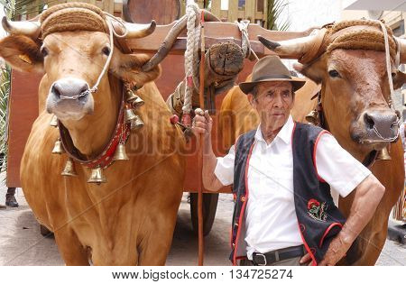LA OROTAVA, TENERIFE, CANARY ISLANDS: 5TH JUNE 2016. Unidentified local farmer and his oxen takes part in one of the island's many