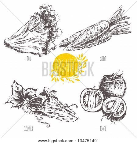 Series - vector fruit and spices. Hand-drawn illustration. Sketch. Healthy food. Linear graphic. Set of lettuce, carrot, cucumber and tomato.