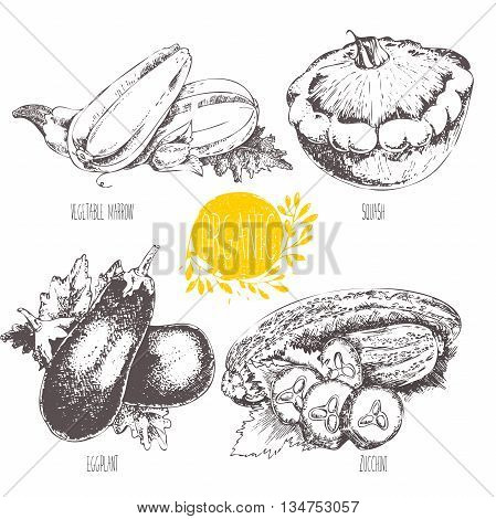 Series - vector fruit and spices. Hand-drawn illustration. Sketch. Healthy food. Linear graphic. Set of squash, eggplant, zucchini and courgette.