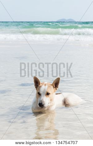 white dog in sea at the beach