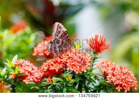A shallow focus closup image of a beautiful Butterfly landing on a tree branch