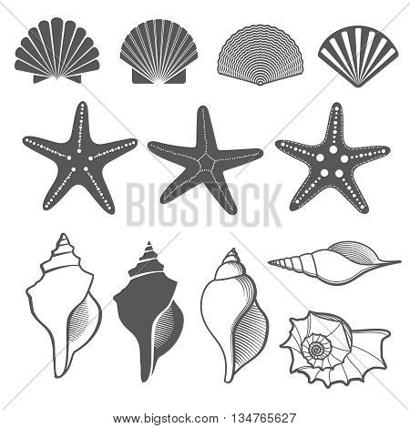 Sea shells and starfish vector set. Shell sea, shell starfish ocean, nature marine shell illustration