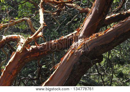 A weird looking old tree in Seattle Washington.