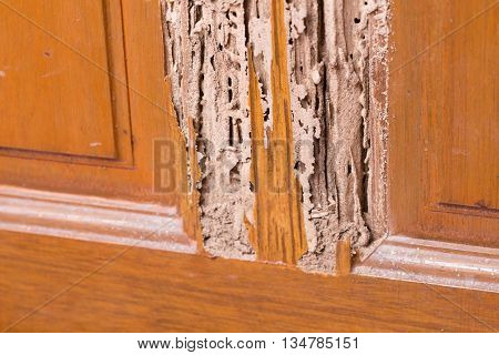 The wood door with termites damage ,termites damage