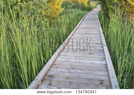 nature trail over swamp - wooden boardwalk path in a early summer scenery - a journey metaphor