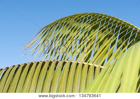 Palm frond green detail against blue sky