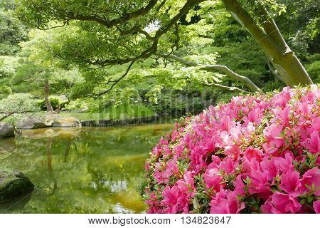 Outdoor Pink Flower Plant Near The Garden Water Pond