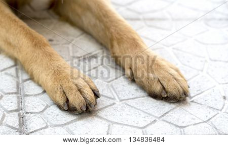 Picture of a German Shepherd Dog paws on a pavement