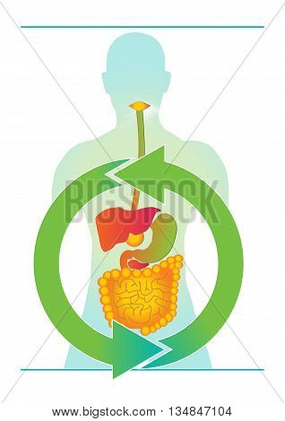 Human body infographic. Stomach colorful vector illustration.