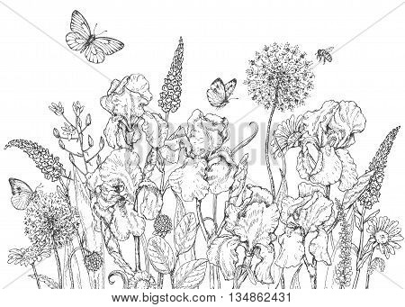 Hand drawn line illustration with iris wildflowers and insects. Black and white doodle wild flowers bees and butterflies. Monochrome floral elements. Coloring page. Vector sketch.