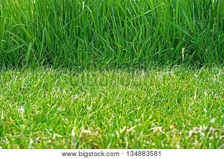 mown green grass and uncut green grass