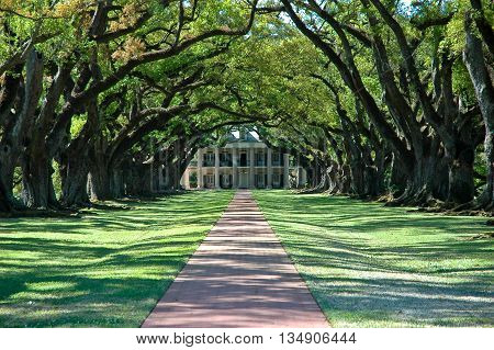 A beautiful Greek Revival Mansion sits at the end of an alley of ancient Live Oaks