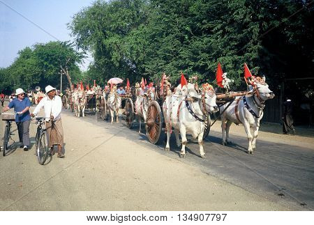 PAGAN / MYANMAR - CIRCA 1987: Richly decorated ox carts with red flags participate in a Buddhist parade in Pagan during a holiday.