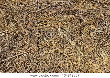 Dry grass dried outdoor and the sun. The texture of the hay. Top view