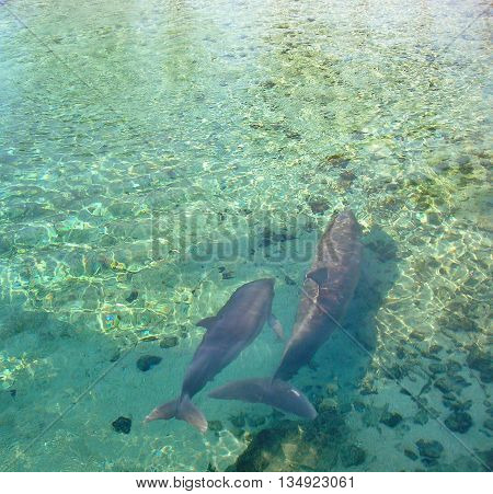Dolphins, mother and baby dolphins, ocean mammals