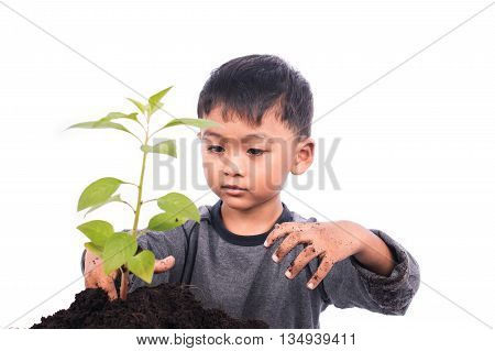 Cute little boy planting tree on white background