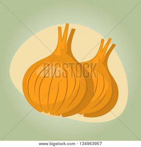vector illustration of onion an a white background