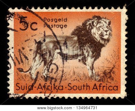 SOUTH AFRICA - CIRCA 1958: A stamp printed in South Africa shows king of beasts, standing lion, circa 1958