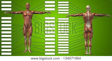 3D illustration of a concept or conceptual 3D human man anatomy and muscle for sport and textbox on green background