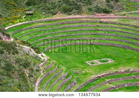 Agricultural terraces in Moray Cusco in Peru