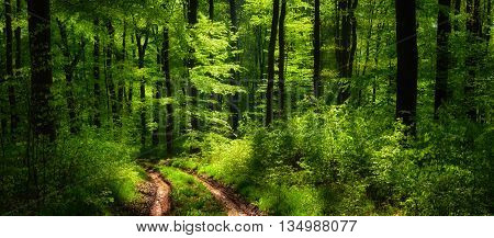 Dreamy scenery in the forest with a path leading through lush green trees in beautiful light