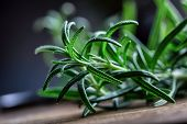 Rosemary. Fresh rosemary herbs. Scissors cut herbs fresh rosemary. Organic aromatic herbs. poster