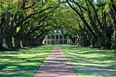 A beautiful Greek Revival Mansion sits at the end of an alley of ancient Live Oaks poster