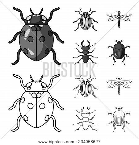Insect, Bug, Beetle, Paw .insects Set Collection Icons In Outline, Monochrome Style Vector Symbol St