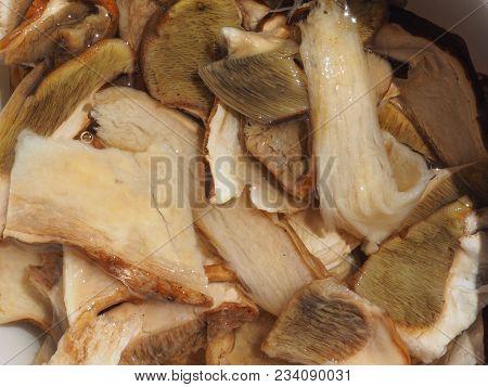 Boletus Edulis Aka Penny Bun Or Porcino Or Cep Mushrooms Food
