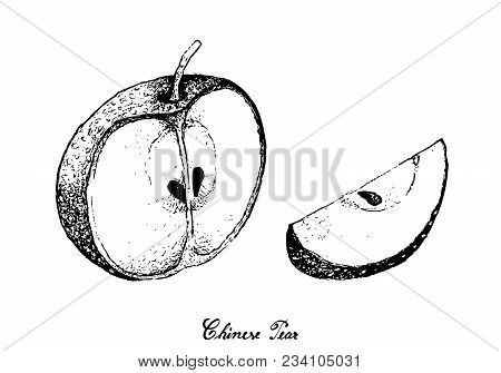Exotic Fruits, Illustration Hand Drawn Sketch Of Nashi Pears, Chinese Pears Or Pyrus Pyrifolia Fruit