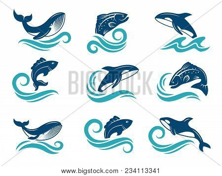 Stylized Pictures Of Marine Animals. Sharks, Fishes And Others. Symbols For Logo Design. Vector Fish
