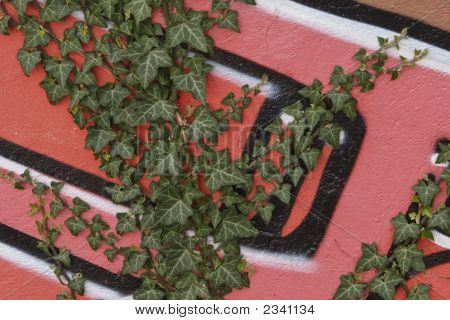 Ivy Growing Over Graffiti