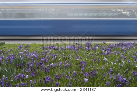 Streetcar In Spring, Zurich, Switzerland