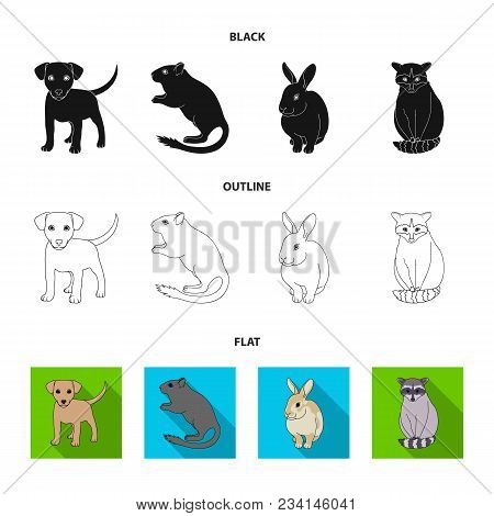 Puppy, Rodent, Rabbit And Other Animal Species.animals Set Collection Icons In Black, Flat, Outline