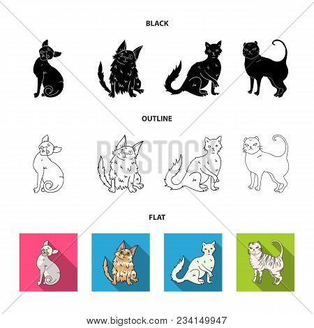 Turkish Angora, British Longhair And Other Species. Cat Breeds Set Collection Icons In Black, Flat,