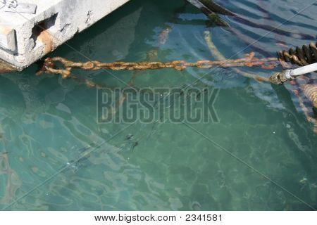 Fish In Spanish Harbour
