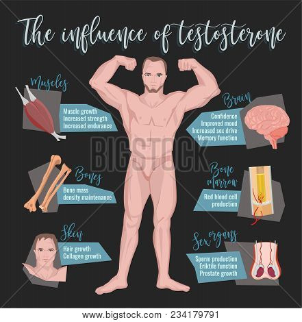 Testosterone Influence Infographic Image Isolated On A Dark Grey Background. Male Sex Hormone And It