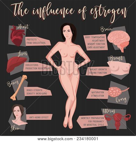 Estrogen Influence Infographic Image Isolated On A Dark Grey Background. Female Sex Hormone And It S