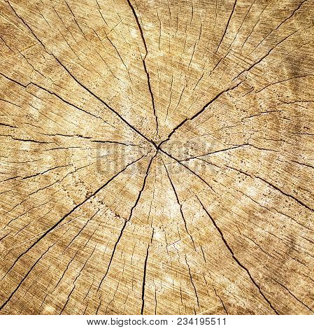 Old Tree Stump. Brown Tree Texture Background With Annual Rings Of Old Tree, Showing Growth Rings. S