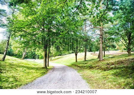 Path In Spring Or Summer Forest, Nature. Road In Wood Landscape, Environment. Footpath Among Green T