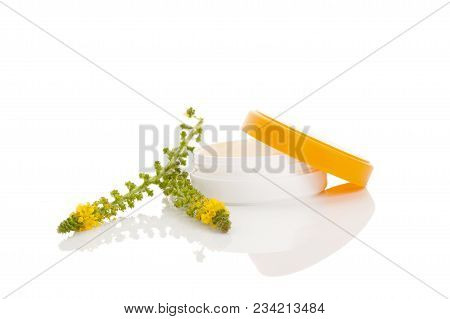 Flower Of A Common Agrimony (agrimonia Eupatoria). Medical Plant. Common Agrimony Creme. Natural Cos