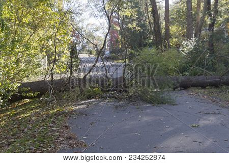A large tree and power lines blown down by a storm lie across a neighborhood road blocking access to it poster
