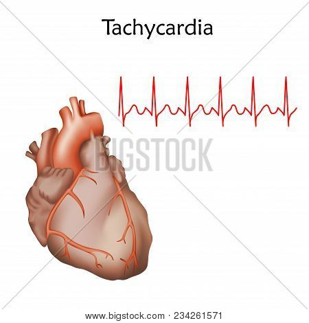 Human Heart. Anatomy Illustration. Red Image, White Background. Heartbeat, Pulse, Ecg.