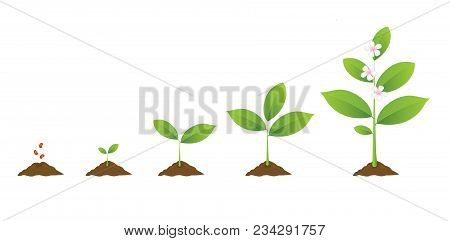 Infographic Of Planting Tree. Seedling Gardening Plant. Seeds Sprout In Ground. Sprout, Plant, Tree